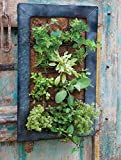 15 in. W x 23 in. H Live Green AquaSav Coco Vertical Wall Planter with Black Zinc Frame