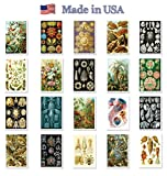 NATURAL CURIOSITIES by Ernst Haeckel postcard set of 20 postcards. Botanical illustrations theme post card variety pack. Made in USA.