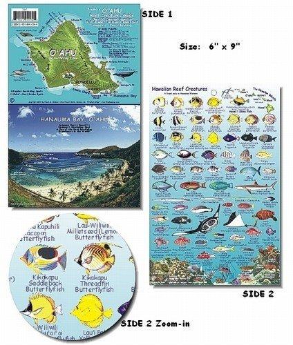 最適な価格 オアフ島ハワイReef魚と生物ガイド、モデル:、Spoorting B015ROC8M6 Goods Goods Shop B015ROC8M6, 【送料0円】:a9a255c7 --- advertdigitalmantra.com
