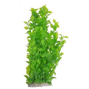 plante aquatique r