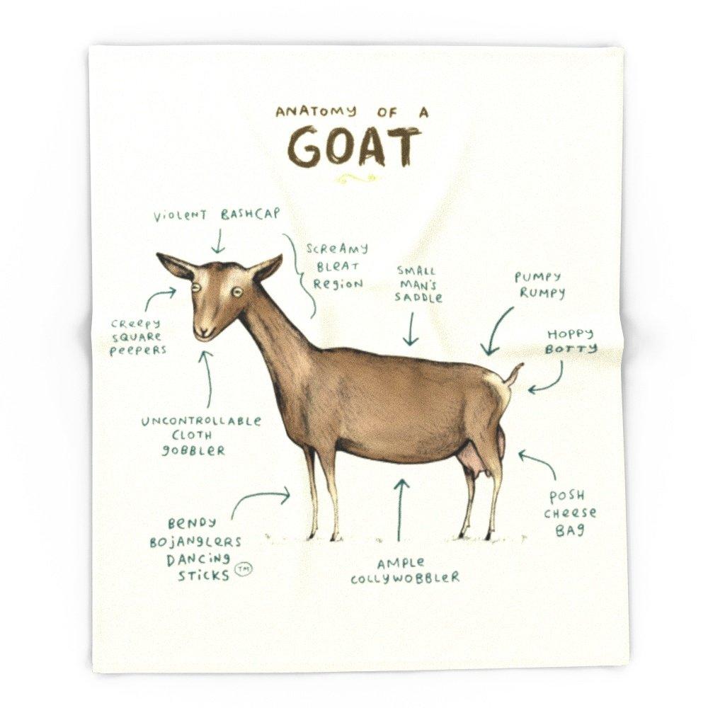 Amazon.com: Society6 Anatomy Of A Goat 51\