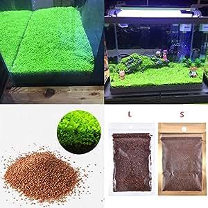 Plantas para acuario, semillas, alfombra de doble hoja, césped de agua, para decoración de pecera, rocas, césped, jardín: Amazon.es: Productos para mascotas