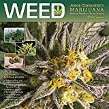 img - for Weed Jorge Cervantes' Marijuana 2018 12 x 12 Inch Monthly Square Wall Calendar, Cannabis Pot Herb 420 Growing book / textbook / text book