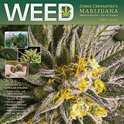 Weed Jorge Cervantes' Marijuana 2018 12 x 12 Inch Monthly Square Wall Calendar, Cannabis Pot Herb 420 Growing