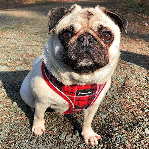 All Pet Solutions Arnés para Perro/Cachorro, tartán, tamaño Grande ...
