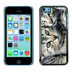 Be Good Phone Accessory // Dura Cáscara cubierta Protectora Caso Carcasa Funda de Protección para Apple Iphone 5C // Kittens American Shorthair Wirehair Manx