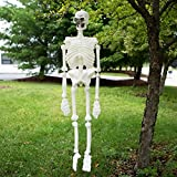 Life Size Plastic Skeleton