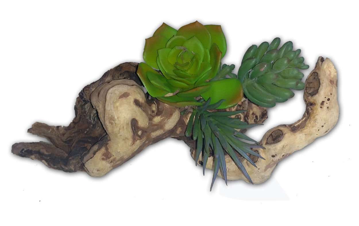 Habiscape 3 Succulents on Driftwood