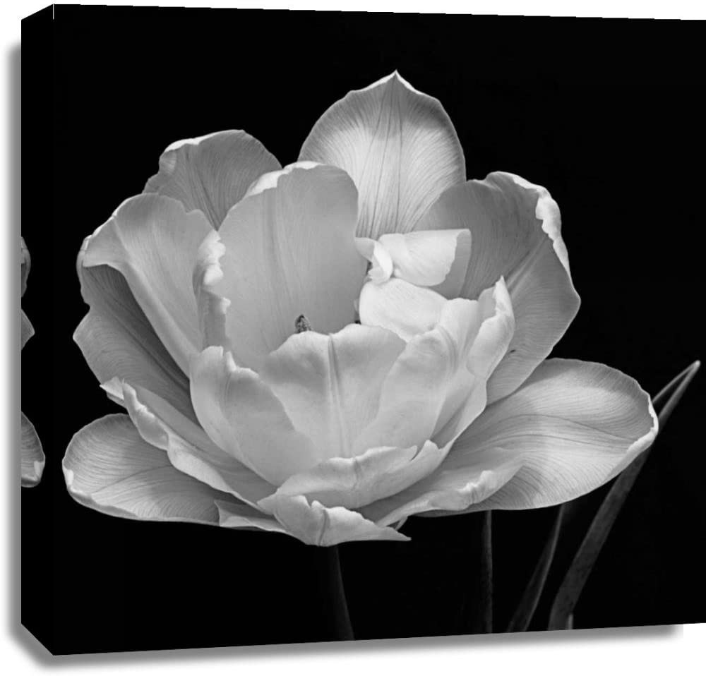 Print Mint The Canvas Print Wall Art - Charles Britt - Summers Comfort - Floral Photography Black & White Artwork on Canvas Stretched Gallery Wrap. Ready to Hang - 30x30″