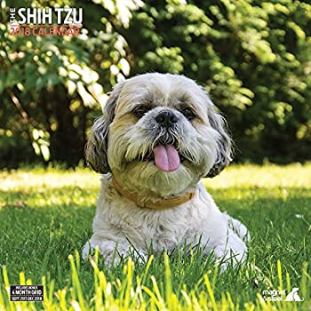Amazoncom Shih Tzu 2018 Deluxe Calendar Office Products