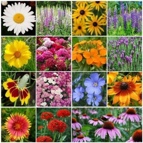 All Perennial Wildflower Mix, 15 Species, Variety Sizes - Species Mix