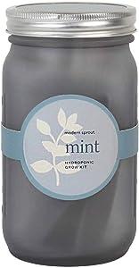 Modern Sprout Garden Jar (Mint)