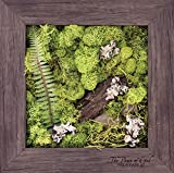 Carpentree 11''x11'' Peace-Biophilic Framed Art