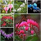 C-Pioneer 10PCS Perennial Herbs Dicentra Spectabilis Flower Plant Bleeding Heart Seeds-Blue