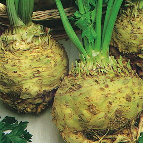 Celeriac - Giant Prague - 3000 Seeds