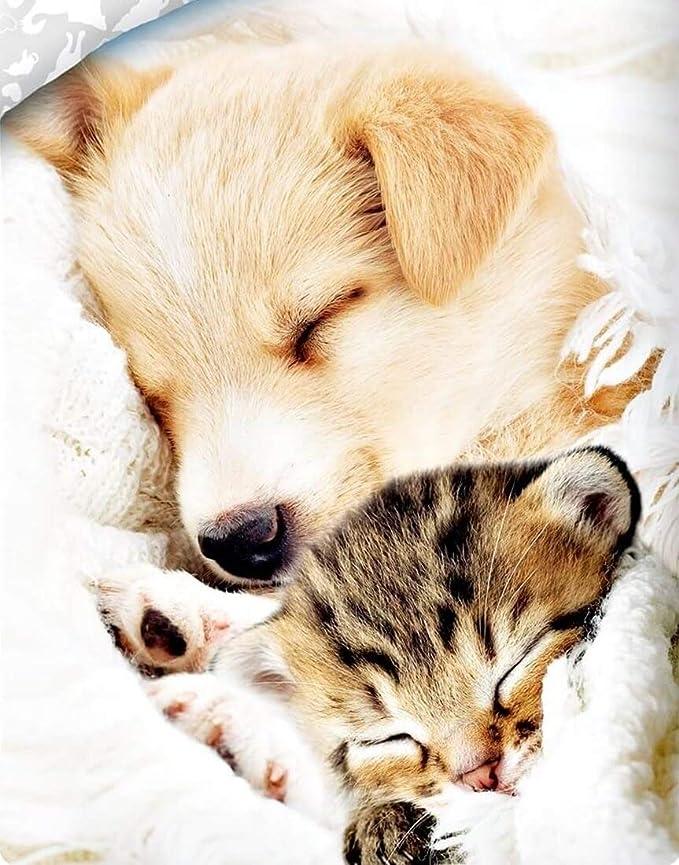 Funda Nordica Edredon Pets Mascotas 140x200 100 x 100 Algodon Doble Dise/ño Reversible