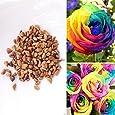 Rosepoem 100pcs rari Rose Arcobaleno semi colorati floreale perenne Balcone Outdoor Living