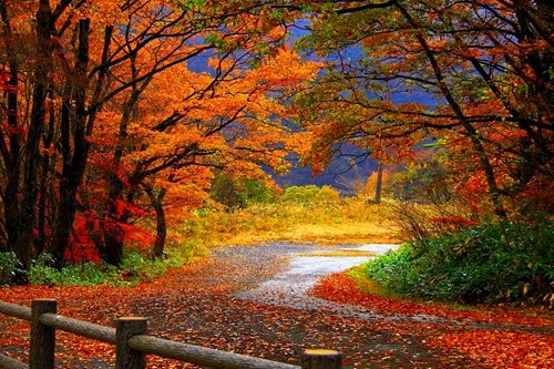 Autumn Scenery - Art Print Poster