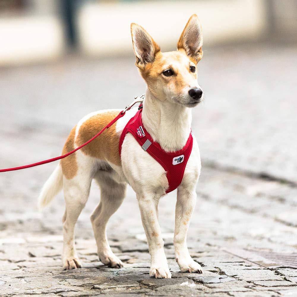 CURLI - Chaleco de malla arnés para perro: Amazon.es: Productos ...