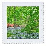 3dRose Danita Delimont - Flowers - Spanish Bluebell, Azalea Woods, Winterthur, Delaware, USA - 12x12 inch quilt square (qs_278835_4)