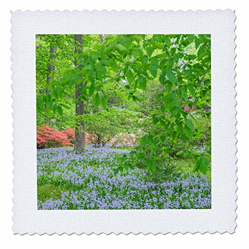 3dRose Danita Delimont - Flowers - Spanish Bluebell, Azalea Woods, Winterthur, Delaware, USA - 12x12 inch quilt square (qs_278835_4) by 3dRose (Image #1)