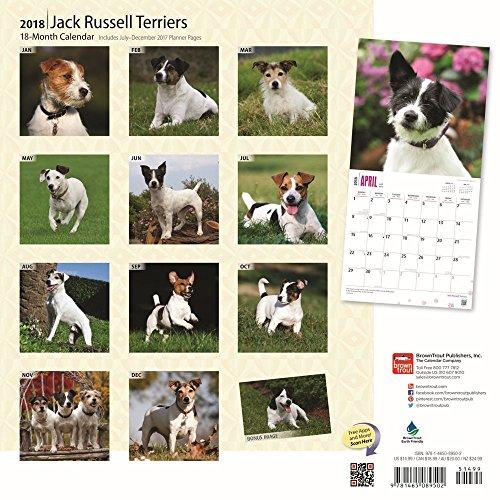 Jack Russell Terriers 2018 Wall Calendar Photo #3