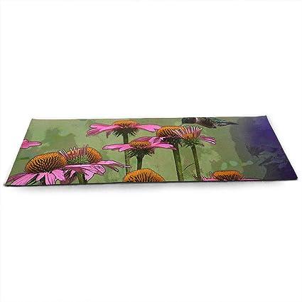 Amazon.com: Coneflower Birdfeeder Plants Pink ECO Aqua Power ...