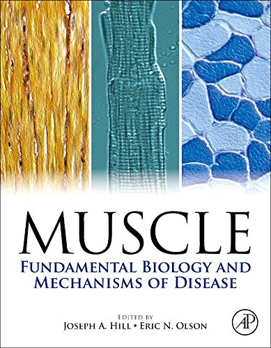Muscle 2-Volume Set: Fundamental Biology and Mechanisms of Disease by Academic Press