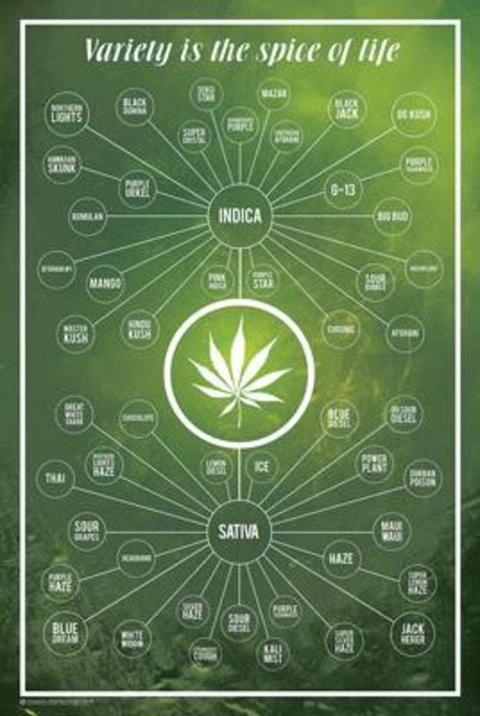 Cannabis- Variety Is The Spice Of Life Poster 24 x 36in