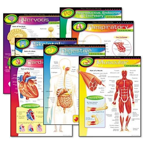 TREND ENTERPRISES, INC T38913 Learning Chart Combo Pack, The Human Body, 17w x 22h, 7/Pack