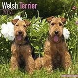 Welsh Terrier Calendar - Breed Specific Welsh Terrier Calendar - 2016 Wall calendars - Dog Calendars - Monthly Wall Calendar by Avonside