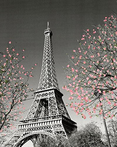 Culturenik Paris Eiffel Tower Blossoms Decorative Photography Travel City Poster Print, Unframed 16x20