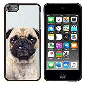TECHCASE---Cubierta de la caja de protección para la piel dura ** Apple iPod Touch 6 6th Touch6 ** --Barro amasado divertido Perro gris del perrito Botón Oído