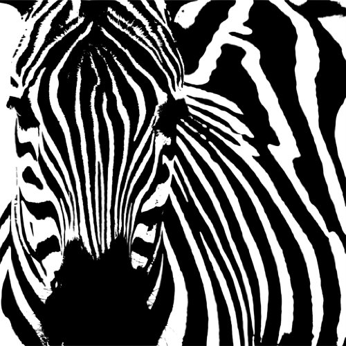 Top Selling Decals - Prices Reduced : Zebra Picture Art – Kids Boys Bed Room - Size : 20 Inches X 20 Inches - Vinyl Wall Sticker - 22 Colors Available