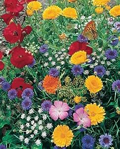 Amazon Com Butterfly Seeded Mat Grow Butterfly Garden