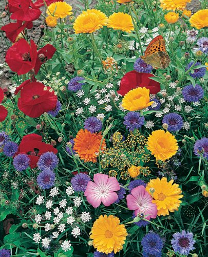 Butterfly Seeded Mat - Grow Butterfly Garden Flowers. Includes: (1) Pre-seeded  17