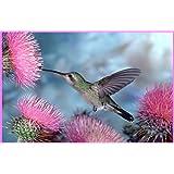 Amazoncom Hummingbird  Flowers Etched Vinyl Stained Glass - Window alert hummingbird decals amazon