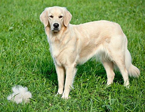 Dog Rake Deshedding Dematting Brush Comb Undercoat Rake
