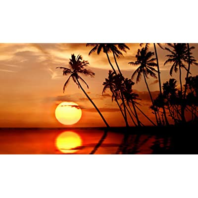 DIY Paint by Numbers Kits Oil Painting Color Talk Canvas Home Wall Decor for Adults Beginner - Sunset in Tropical Paradise 16X20 Inch (Frameless): Toys & Games