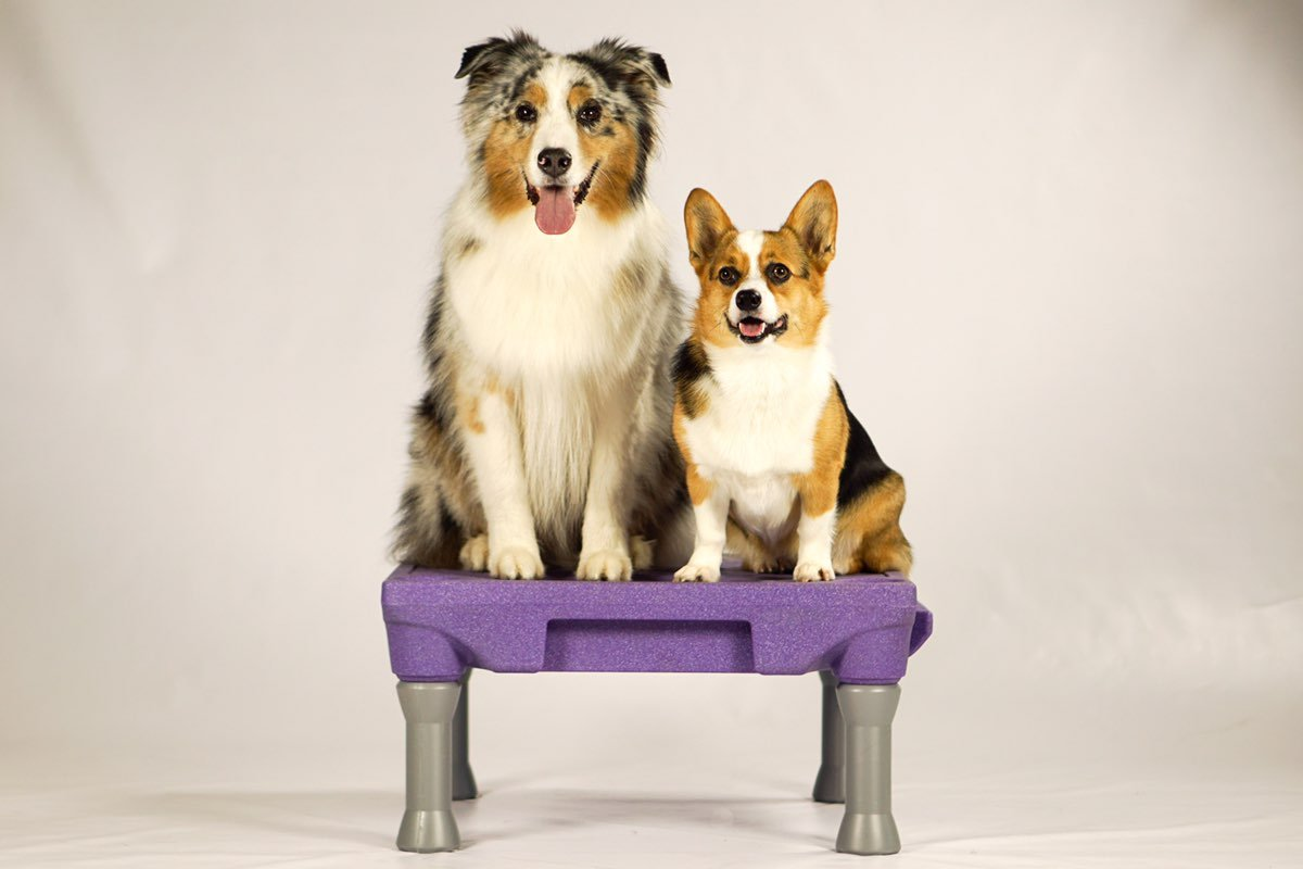 Blue-9 Pet Products The KLIMB Dog Training Platform and Agility System (Purple)