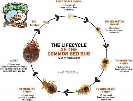 Amazon.com: Variaciones de patrullas de insectos de cama ...