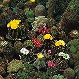 Cactus Mix Seeds - 200 mg - Fascinating!