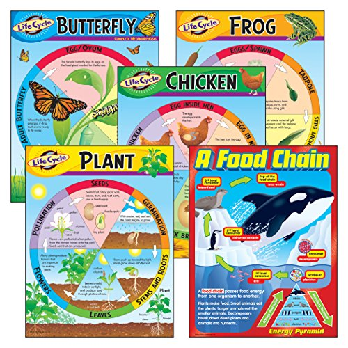 TREND enterprises, Inc. Life Cycles Learning Charts Combo Pack, set of 5 (Frog Life Cycle Activities)