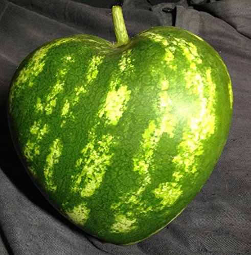 (Heart Shape Watermelon Mold)