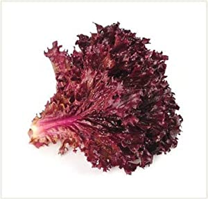 Ruby Red Lettuce Seeds- 100 Count Seed Pack - Non-GMO - A deep red Variety That is Excellent for garnishes and adds Beautiful Color to Salads. - Country Creek LLC