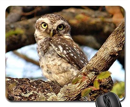 Image of: Pixabay Image Unavailable Amazoncom Amazoncom Mouse Pads Spotted Owlet Athene Brama Bird Owl