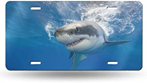 "NZDBA Great White Shark in Mexico Aluminum Car License Plate Cover Auto Truck Car Front Tag License Plate Frame Cover 6""x12"""