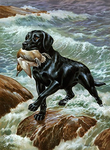 Labrador Retriever Wallpaper Wall Mural - Self-Adhesive - Multiple Sizes - National Geographic Image from Magic (4' Labrador Retriever)