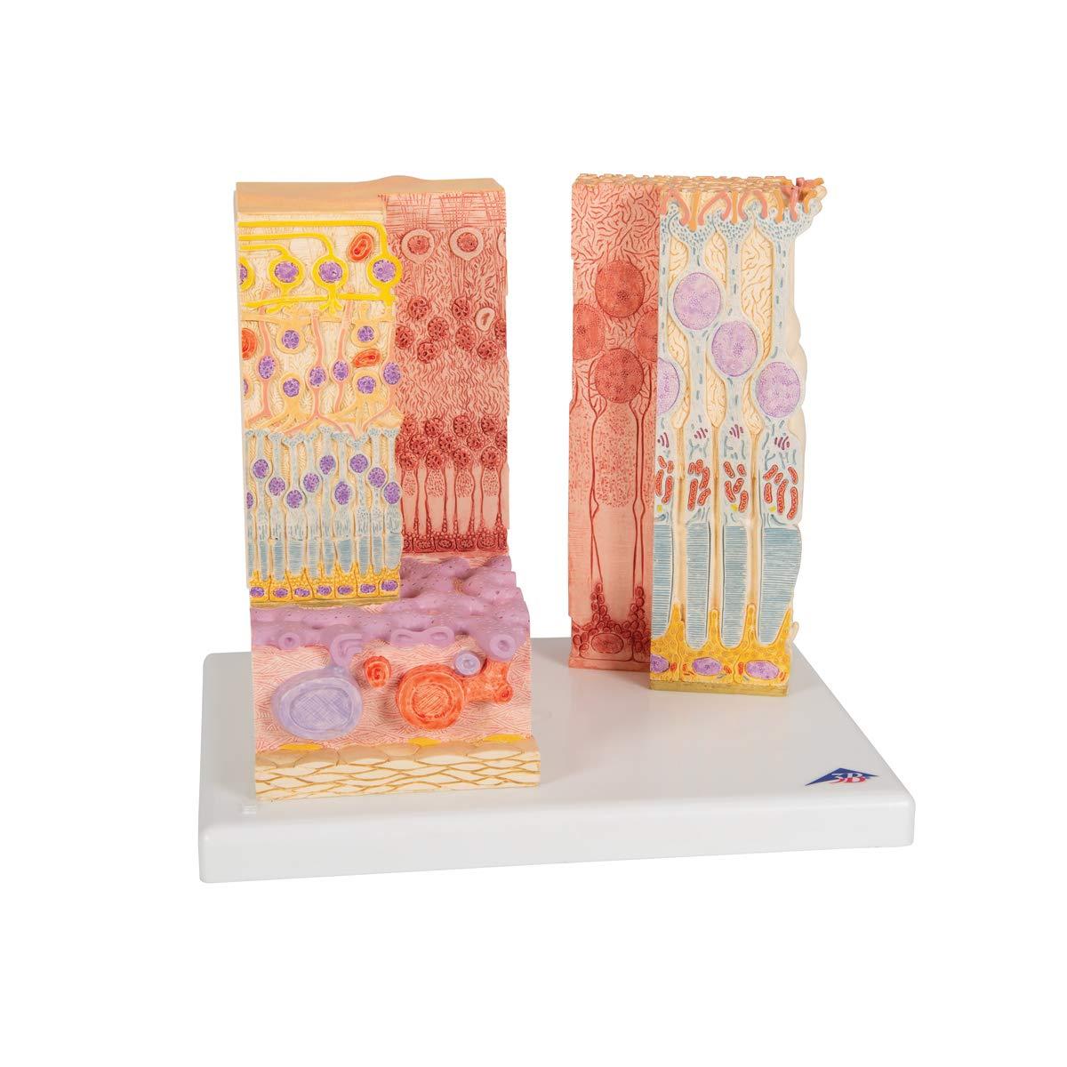 3dRose cst/_17301/_3 Dachshund Barking Machine-Ceramic Tile Coasters Set of 4