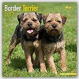 Border Terrier Calendar 2017 (Square)